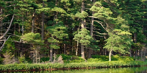 Forests Adrift. Currents Shaping the Future of Northeastern Trees.