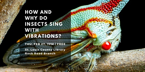 How and Why Do Insects Sing with Vibrations?