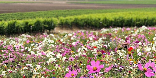 Cambria Estate Winery Spring +Sustainability  Celebration