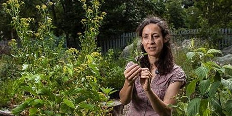 Foraging and Taxonomy: Walk and Workshop tickets