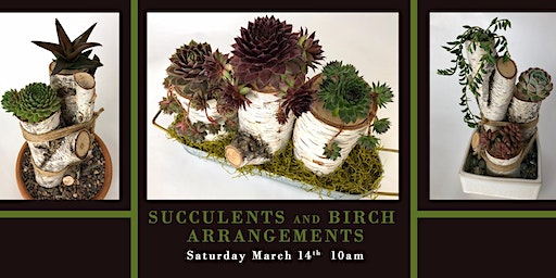 Succulents and Birch Arrangements