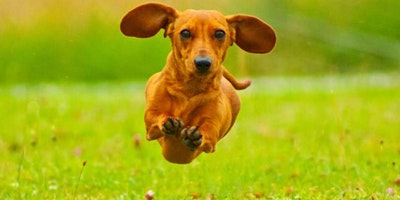 Celebrate Leap Day at the Puppy Pub