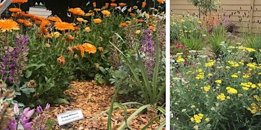 2020 Eco-Friendly Garden Tour
