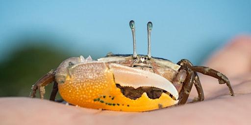 Fiddler Crab Workshop for Kids - St. John, IN