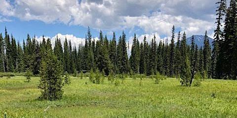 Montane Fens of Oregon & Washington