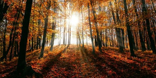 Fall Equinox Meditation + Sound Bath with Tara Atwood: Open Doors Yoga, N. Attleboro