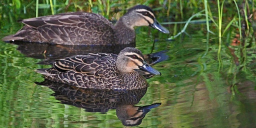 Wetlands and Waterways - School Holiday Program for 5 to 12 year olds