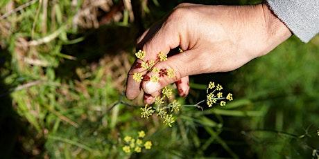 Wonderful Wild Weeds Walk - Strathfield tickets