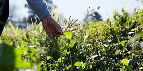Wonderful Wild Weeds Walk - Arncliffe tickets