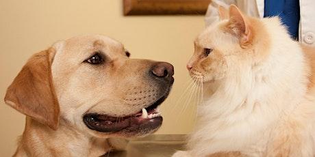 """Seminar für Tierärzte in Nürnbeg am 27.05.2020: """"Reisekrankheiten"""" – Vector borne diseases bei Hund und Katze Tickets"""
