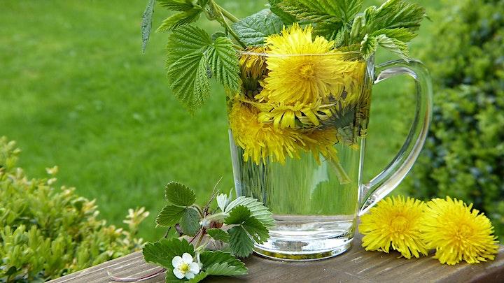 Art of Making Medicinal Teas image