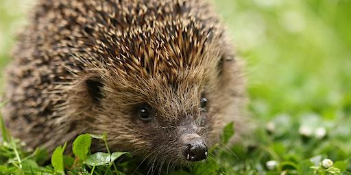 Creating Highways for Hedgehogs
