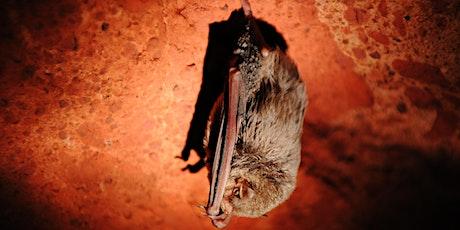 Des chauves-souris et des hommes : étude d'une grotte tickets