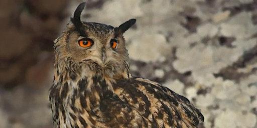 J'ai RDV avec la Biodiversité : aujourd'hui, la vie la nuit