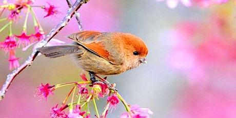 Spring Bird Walk with Alan Devoe Bird Club tickets