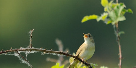 Dawn Chorus Walk - Idle Valley tickets