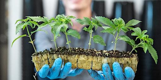 MedPharm Iowa: Meet the Grower