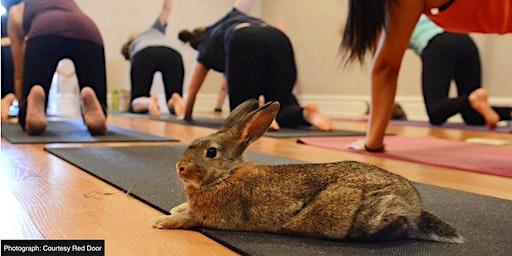 Bunny Yoga with Adoptable Bunnies