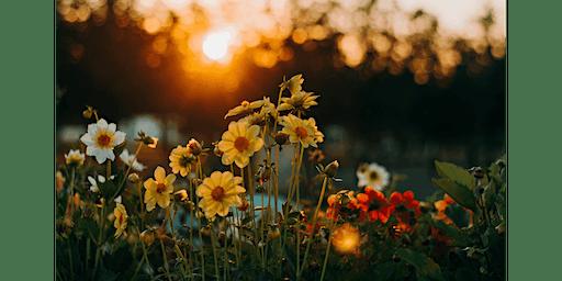 Gardening with Bob Dailey
