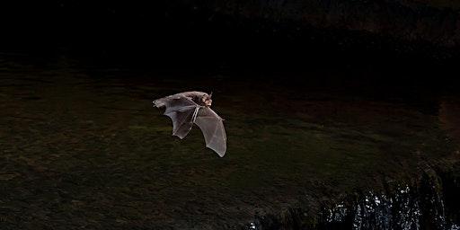 Discovering Bats