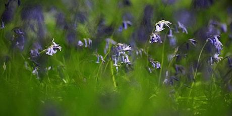 Woodland spring flowers walk tickets