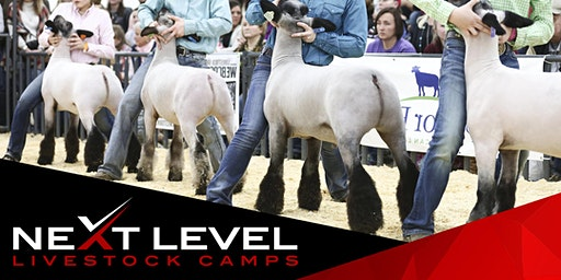 NEXT LEVEL SHOW SHEEP CAMP | August 1st/2nd, 2020 | Red Bluff, CA