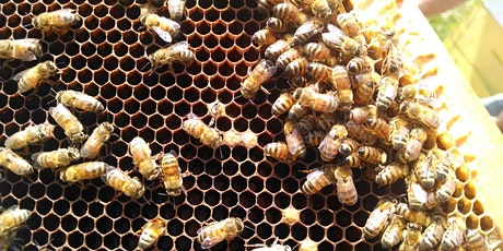 A - BEE - C's of Beekeeping tickets