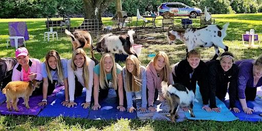 Goat Yoga Katy - Mimosas or Sangria's!!!