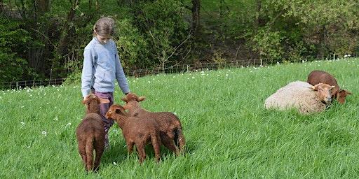 Lammzeit am Naturhof Witten