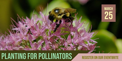 Blue Thumb Workshop: Planting for Pollinators - North St. Paul