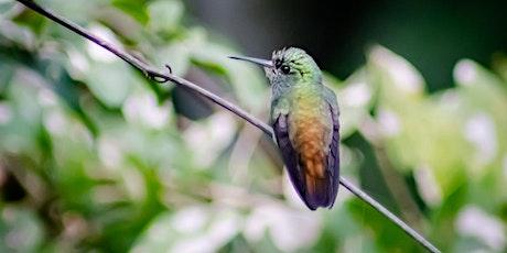 Saída Fotográfica para Observação de Pássaros na Juréia ingressos