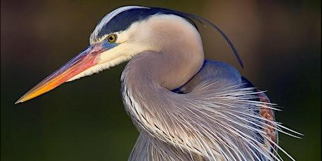 Wondrous Wetlands tickets