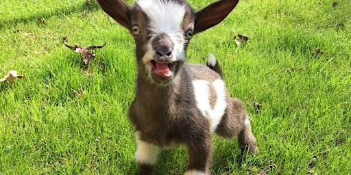 Baby Goat Care Class