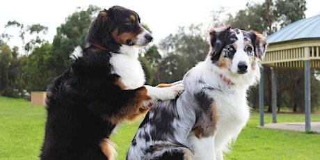 Raindrop Technique® Seminar für Hunde Tickets