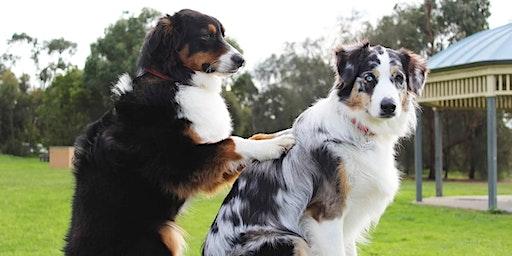 Raindrop Technique® Seminar für Hunde