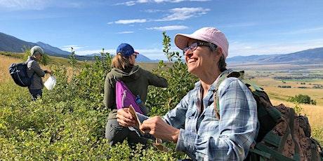 Medicinal Plant Walks- Deep Creek Trailhead tickets