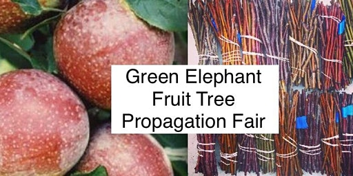 2nd Annual Green Elephant Fruit Tree Propagation Fair & Potluck