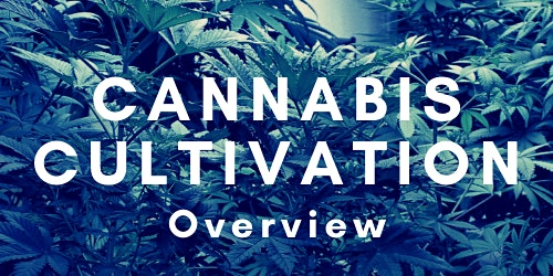 Cannabis Cultivation Overview