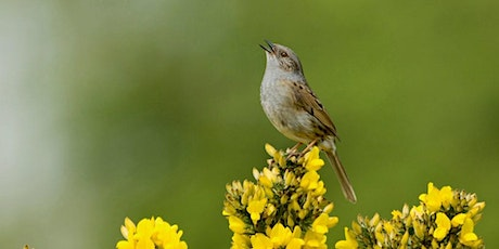 Dawn Chorus Walk tickets