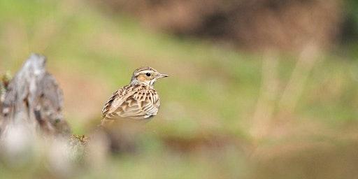 Woodlark Wander