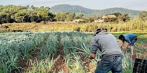 Visita de un campo agroecologíco - cosecha y taller de ensaladas