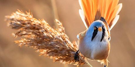 Birding for Beginners at St. Aidan's tickets