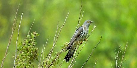 Birding for Beginners at Fairburn Ings tickets