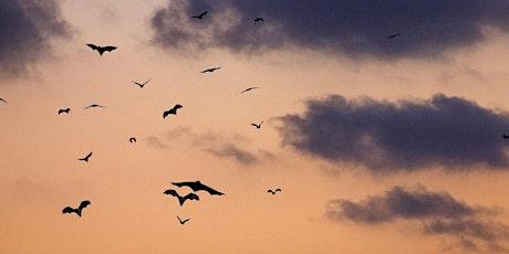 Bat walk on Therfield Heath tickets
