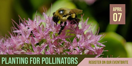 Blue Thumb Webinar: Planting for Pollinators (Formerly in Woodbury) tickets