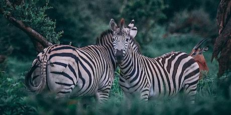 Zebras Unite & #Newmittelstand meetup no. 3 Tickets