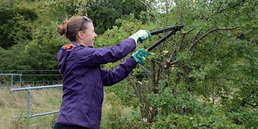 Volunteer Work Day: Woodhouse Washlands Nature Reserve