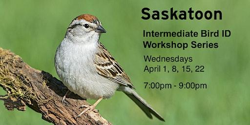 Saskatoon - Intermediate Bird ID Workshops