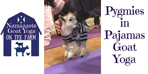 Pygmies in Pajamas Goat Yoga: Namaaaste Goat Yoga