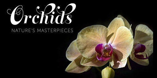 """Ron Parsons Presents: """"Rare and Unusual Orchids"""""""